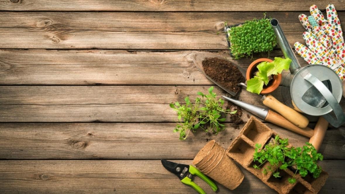 کاشت سبزی خوردن در خانه : اگر باغچه ندارید، گلدان که دارید!