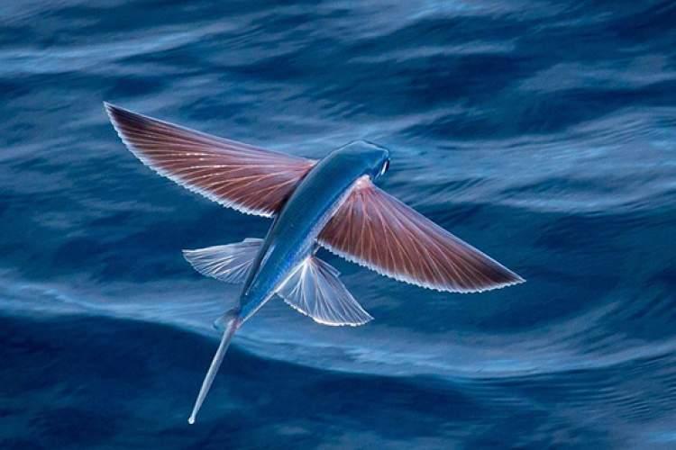 تکامل فرایندی شگفت انگیز و همواره در تغییر