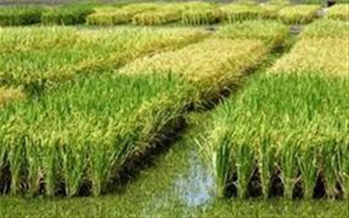 هشدار های هواشناسی به کشاورزان و دامداران