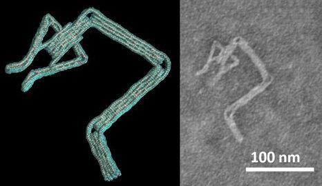 طراحی نانوربات دی. ان. ای با نرم افزار محققان دانشگاه اوهایو